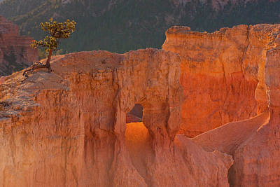 Arid Wall Art - Photograph - Usa, Utah, Bryce Canyon National Park by Jaynes Gallery