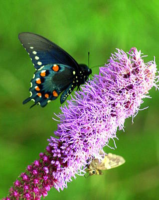 Photograph - 242 Butterly by Marty Koch