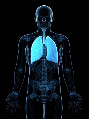 Healthy Lungs Art Print by Sciepro/science Photo Library