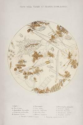 Cholera Epidemic Research Art Print by British Library