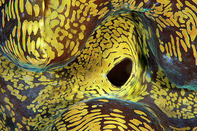 Abstract Purse Photograph - Oceans by Andre Seale
