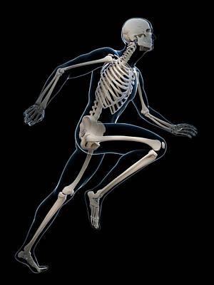 Skeletal System Of Runner Art Print by Sebastian Kaulitzki