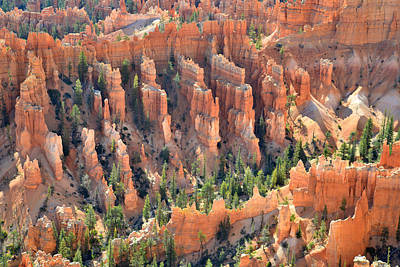 Photograph - Bryce Canyon by Ray Mathis