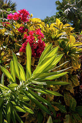 Bougainvillea Leaves Photograph - Dominican Republic, Punta Cana, Higuey by Lisa S. Engelbrecht