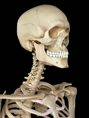 Human Head Photograph - Human Skull by Sciepro