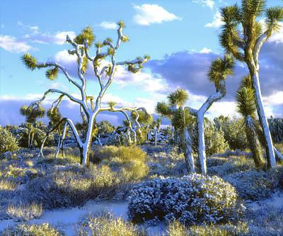 Usa, California, Joshua Tree National Art Print