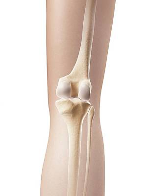 Human Knee Joint Art Print by Sebastian Kaulitzki