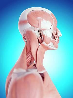 Human Neck Muscles Art Print by Sebastian Kaulitzki/science Photo Library