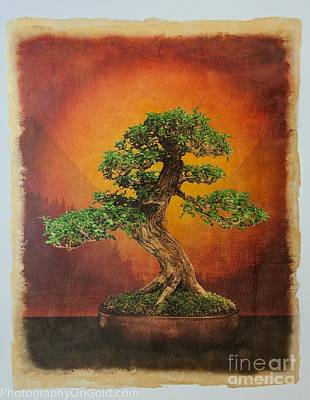 Bonsai Tree Photograph - Limited Edition Bonsai Tree Aaron Buchler Escambron Tree by Jim Swallow