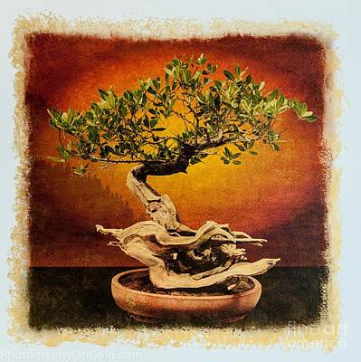 Bonsai Tree Photograph - Limited Edition Bonsai Tree Mary  Madisons Buttonwood by Jim Swallow