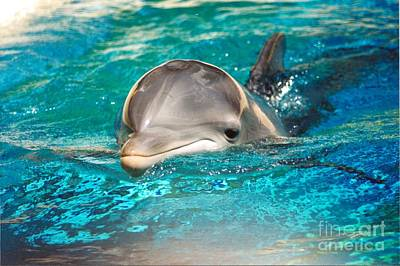#285 Dolphin Keep Smiling Sunny Happy Photography Art Print by Robin Lee Mccarthy Photography
