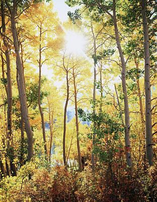 California, Sierra Nevada Mountains Art Print by Christopher Talbot Frank