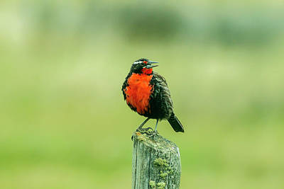Meadowlark Wall Art - Photograph - Chile, Patagonia by Jaynes Gallery