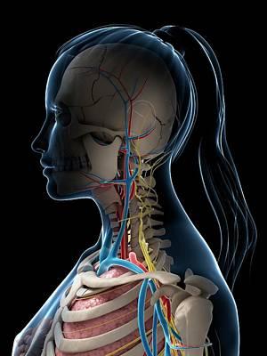 Human Head Photograph - Female Anatomy by Sebastian Kaulitzki