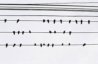 Photograph - 29 Pigeons by Dean Harte