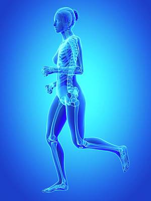 Jogger Wall Art - Photograph - Skeletal System Of Runner by Sebastian Kaulitzki