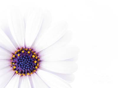 White Daisy Photograph -  Beautiful White Flower In High Key by Jose Elias - Sofia Pereira