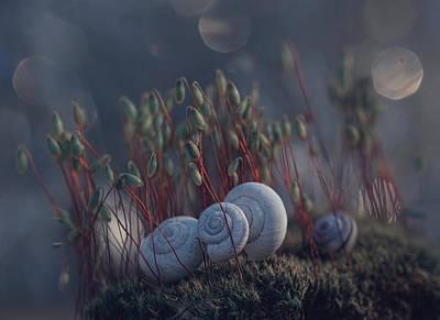Snail Photograph - ``@@@... by Dimitar Lazarov -