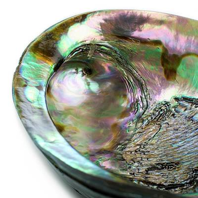 Abalone Photograph - Abalone Shell by Science Photo Library