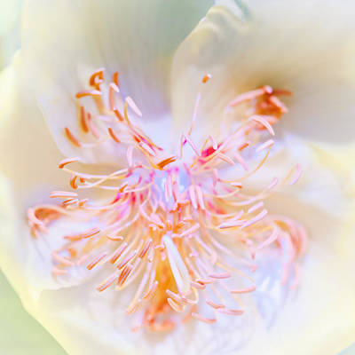 Photograph - Abstract Flower by U Schade