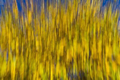Photograph - Abstract Of Autumn by David Pyatt