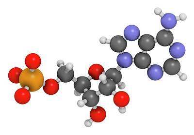 Adenosine Monophosphate Molecule Art Print