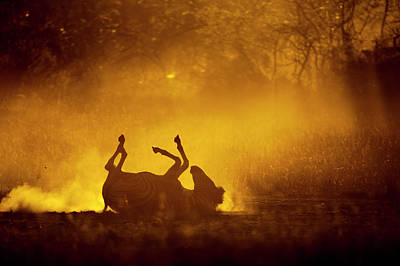 Africa, Botswana, Moremi Game Reserve Art Print by Paul Souders