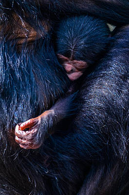 Humanlike Photograph - Akimbo by Brian Stevens