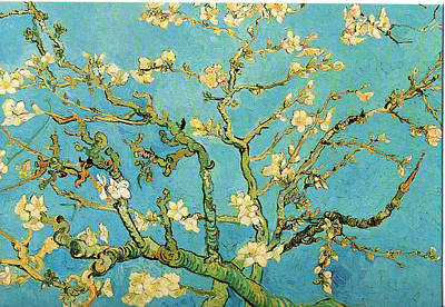 Bloom Painting - Almond Branches In Bloom by Celestial Images