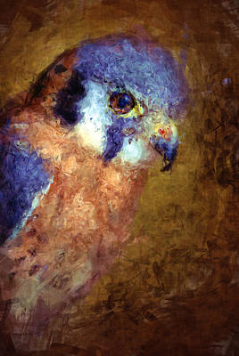 American Kestrel Falco Art Print by Robert Jensen