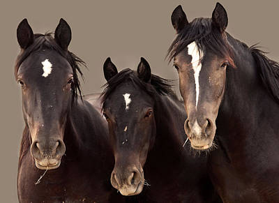 3 Amigos Sepia Wild Mustang Print by Rich Franco