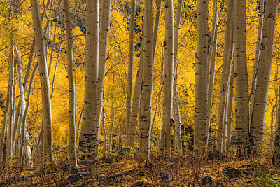 Photograph - Among The Aspens by Douglas Pulsipher