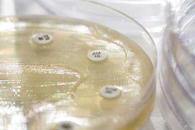 Antibiotic Sensitivity Testing Art Print