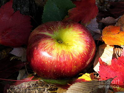 Photograph - Apple by France Laliberte