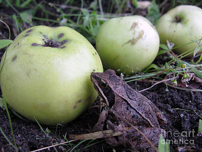 Photograph - 3 Apples And A Frog by Ausra Huntington nee Paulauskaite