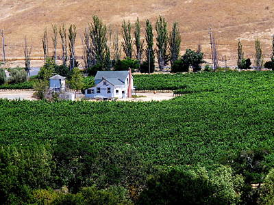 Photograph - Artesa Vineyards And Winery by Jeff Lowe