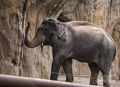 Animal Photograph - Asian Elephant by Mandy Judson