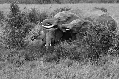 Photograph - At The Waterhole by Michele Burgess