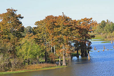 Atchafalaya Basin In Louisiana Art Print