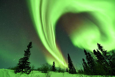 Aurora Borealis Over Trees Art Print by Dr P. Marazzi
