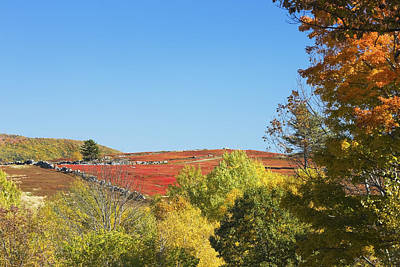 Maine Meadow Photograph - Autumn Colors In Maine Blueberry Field And Forest by Keith Webber Jr