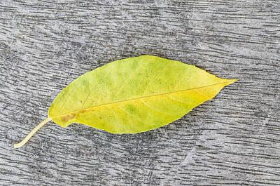 Blue Hues - Autumn leaf by Paulo Goncalves