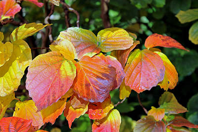 Photograph - Autumn Leaves by Tony Murtagh