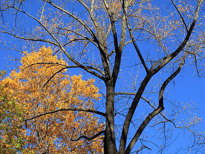 Photograph - Autumn Trees by Frank Romeo
