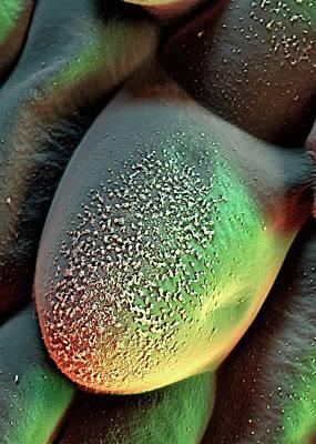 Azolla Plant Surface Art Print