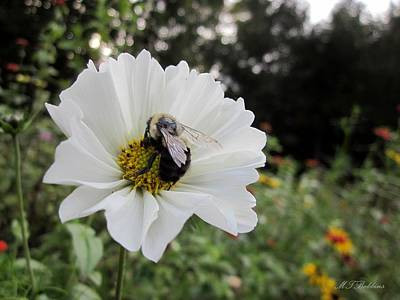Photograph - Bee On Cosmos by MTBobbins Photography