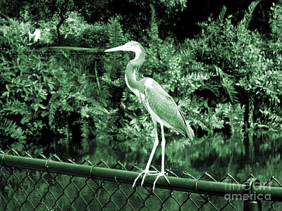 Photograph - Heron. Bird Collection. Black Grey Green Colors by Oksana Semenchenko