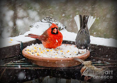 Photograph - 3 Birds In The Snow by Sandra Clark