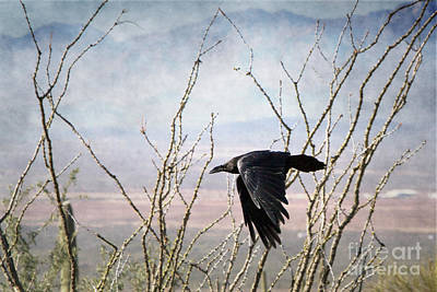 Photograph - Common Raven by Marianne Jensen