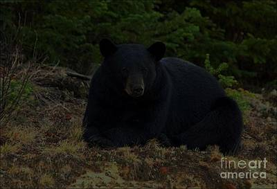 Photograph - Black Bear by Diane Kurtz